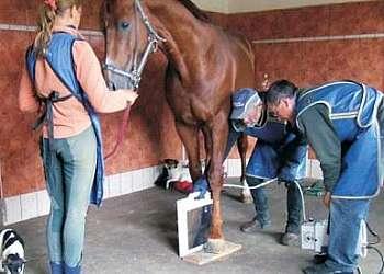 Detector raio x veterinario