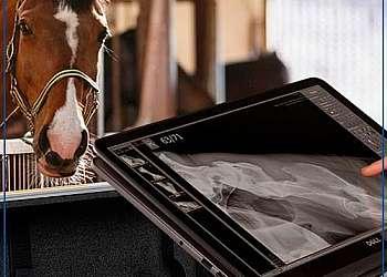 Raio x digital portatil veterinario